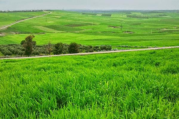 http://orientini.com/uploads/Orientini.com_agriculture_tunisie_2018.png