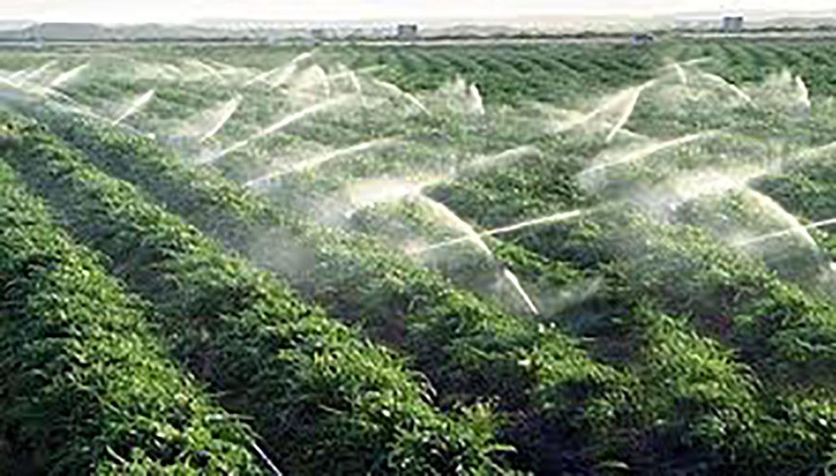 https://orientini.com/uploads/projet_agriculture_2018.jpg